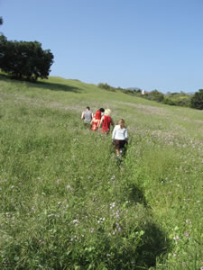 hashers on trail through green tall grass field